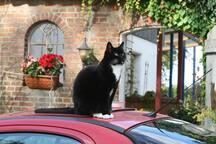 Lulu auf dem roten Auto
