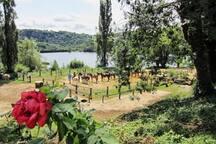 vue carrière chevaux lac