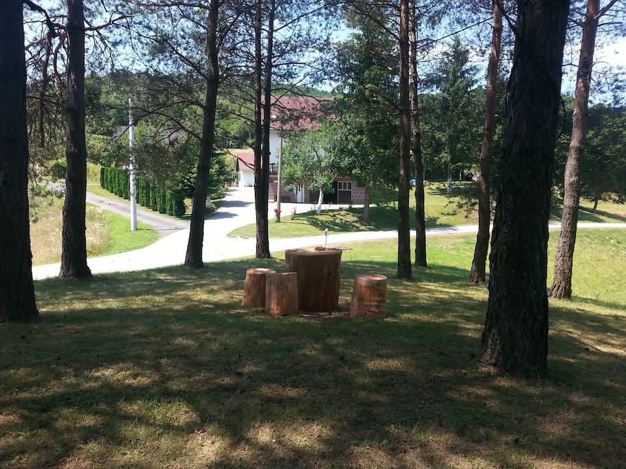 grove of pine trees in front of the house