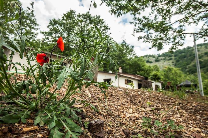 Rifugio Sotto Le Stelle-Owl Room - Sasso di Castalda - Casa