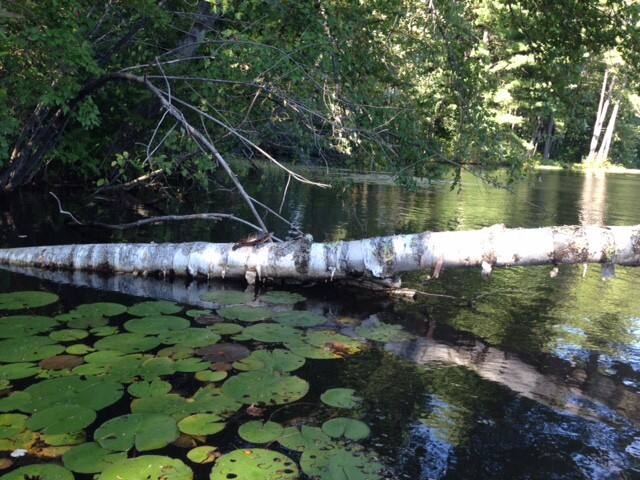 canoeing to find turtles