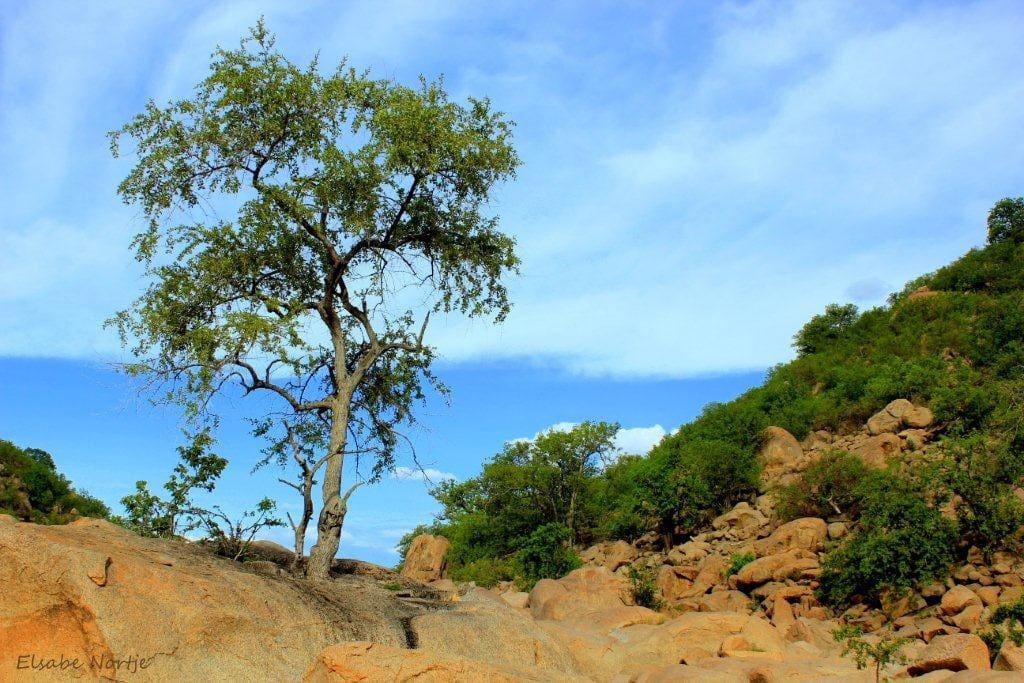 Tree growing out Granite rock