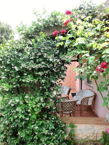 rose e gelsomino in veranda