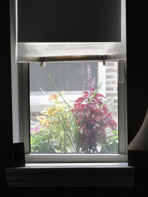 Plants grow upwards here, but pictures don't always show it!  View from guestroom in summer