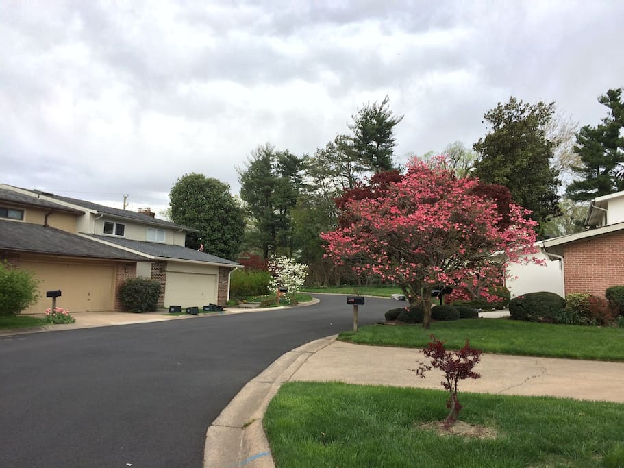 Quiet and beautiful neighborhood with parking