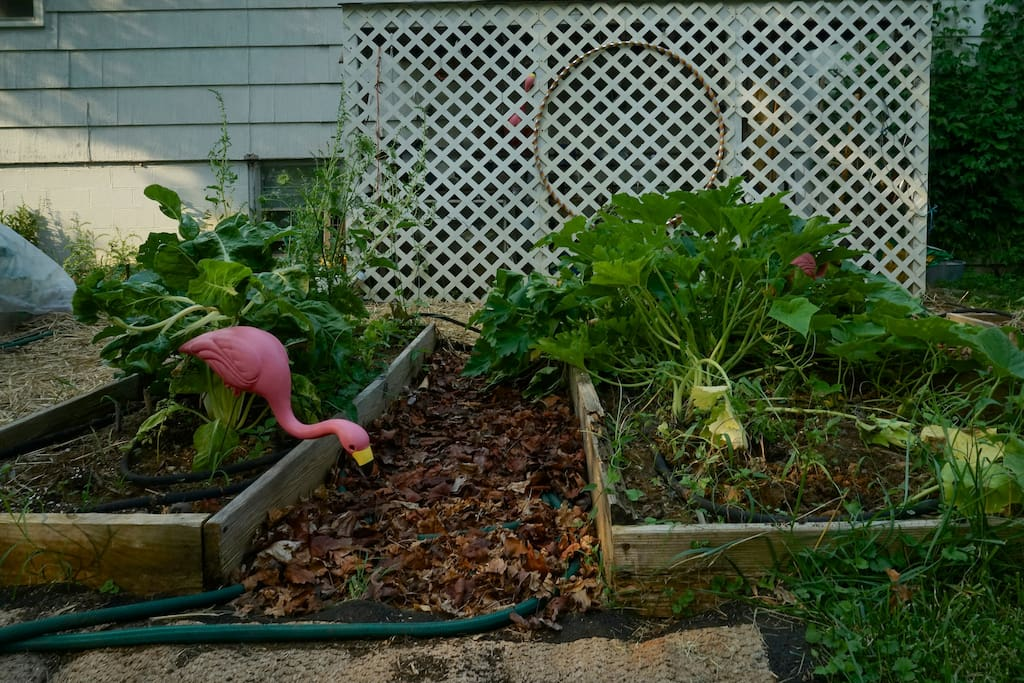 Flame and Raven are avid gardeners - composting guesthouse scraps into our organic beds.