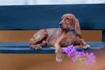 Nuestra mascota Spartacus / Our lovely pet Spartacus