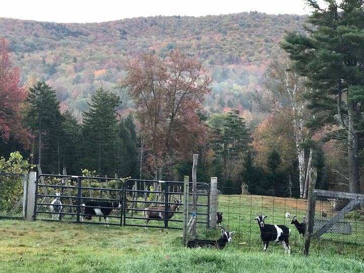 Yurt in Warren Vermont at a Goat farm!!