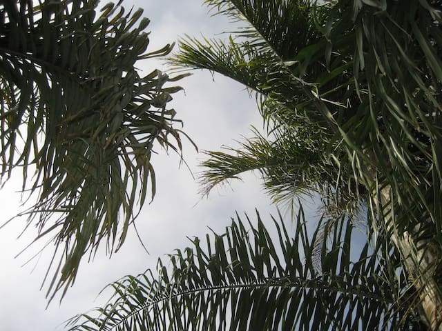 I am a palm tree NUT.  I have more than a dozen palm trees on my property.