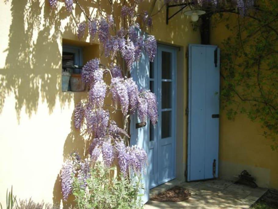 Wisteria at Altipertoli's kitchen door