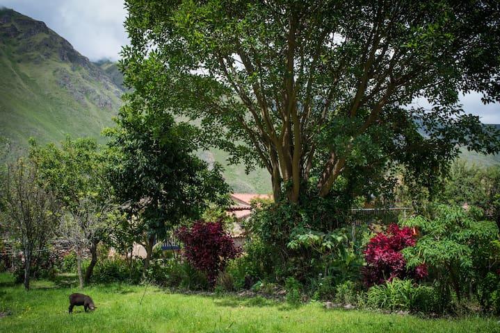 Secret Garden House, Town Center - Ollantaytambo - Bed & Breakfast