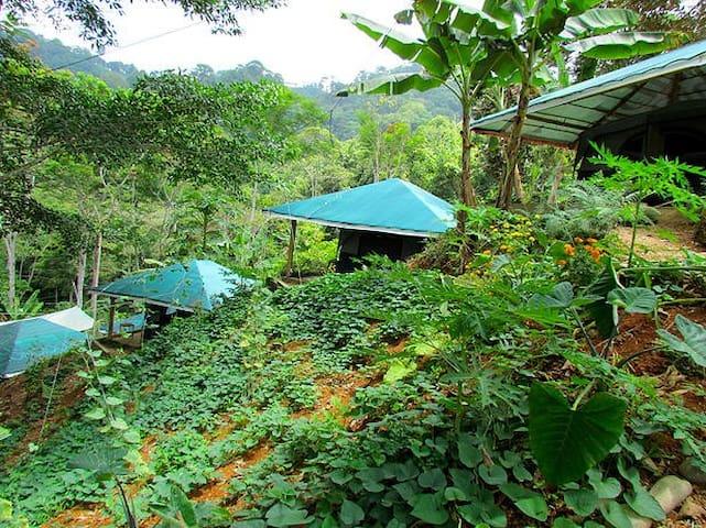 Jungle Retreat - Balsar - 텐트