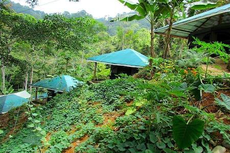 Jungle Retreat - Balsar