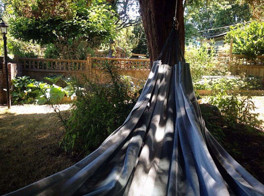 Backyard hammock views.