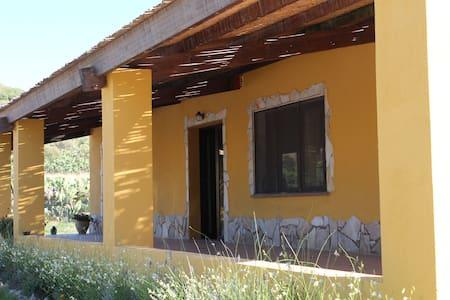 Palmas vecchio vicino a Portopino - San Giovanni Suergiu