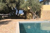 Swimming pool & garden area