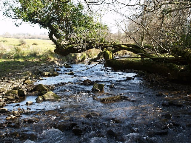 This is our little river at the bottom of the valley. We have 6 acres of grounds and private woods to walk in.