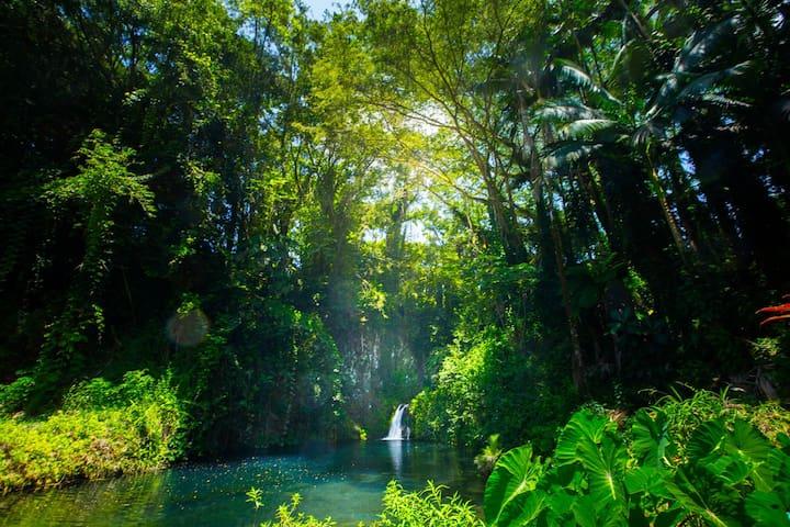 Aloha Falls ~ Sanctuary in Hilo