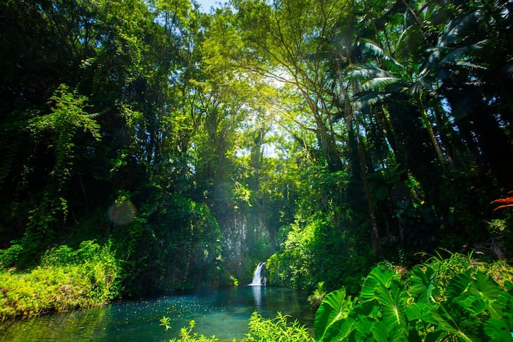 Aloha Falls ~ Sanctuary in Hilo: 40% off monthly!