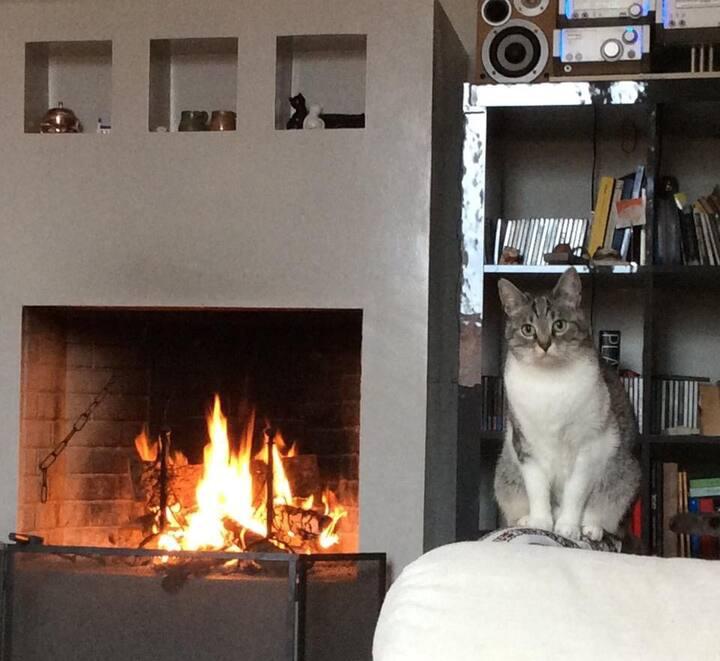 La casina dei gatti S