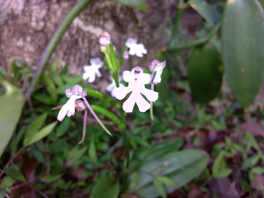 """ petite orchidée sauvage """