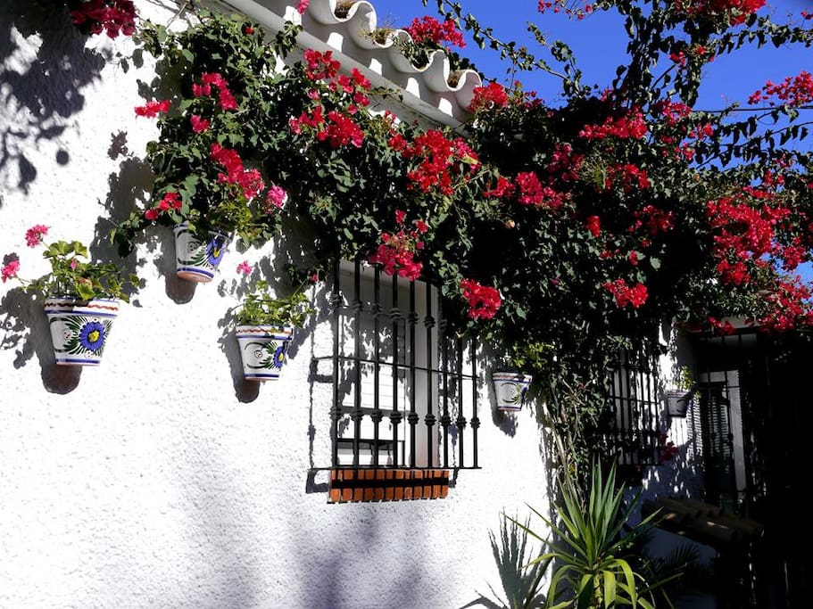|Flowers everywhere in a private enclose garden