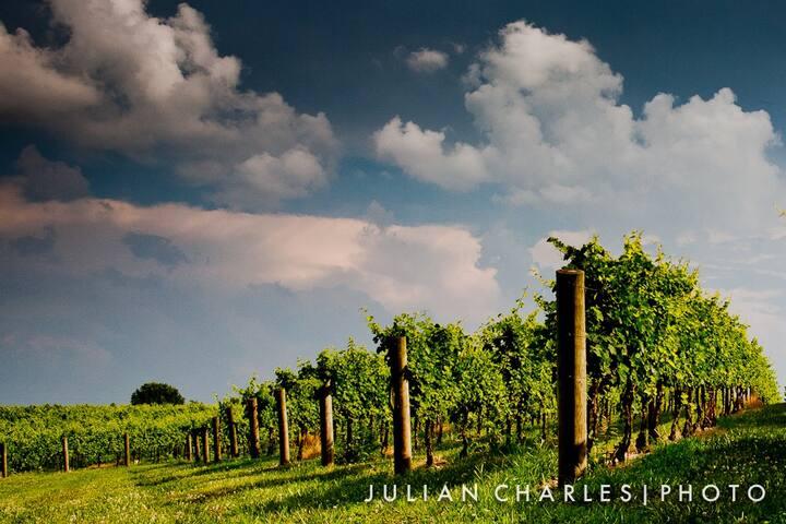 Sunrise in the vineyard.