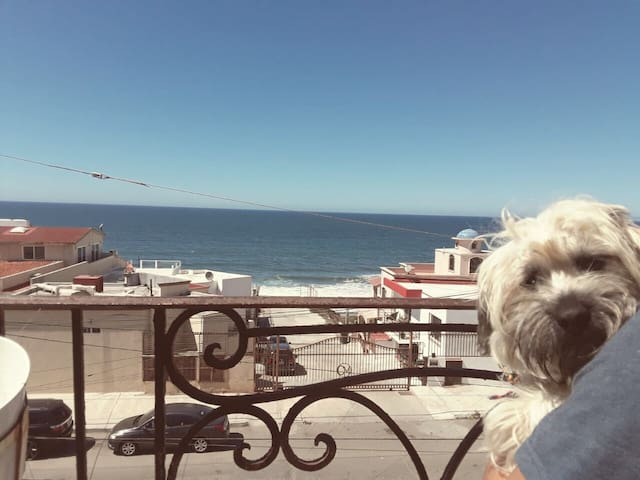 She adores to be cuddled as she looks at the sea on the balcony