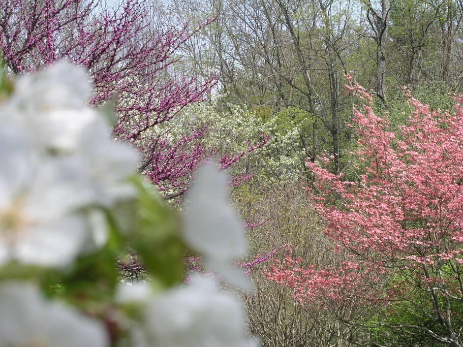 Springtime in the Backyard