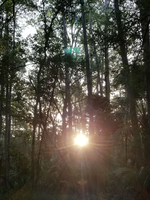 Sun rising in the forest