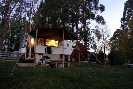 Cosy Comfortable Housebus - Te Anau