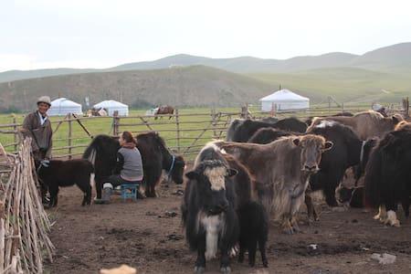Mongolian nomadic family - Ulaanbaatar - Yurt