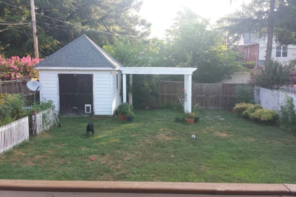 backyard with shed and veggie garden