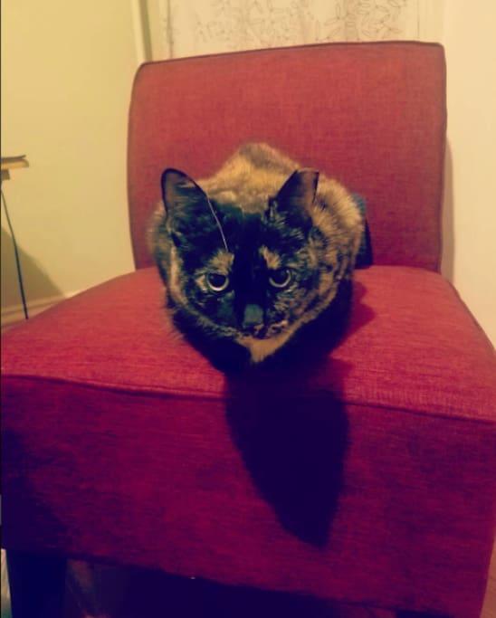 Deborah the Cat