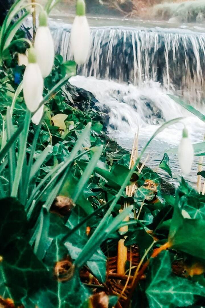 The Garden Water Fall.