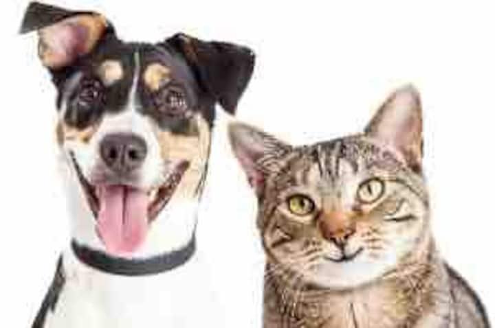 Pet Friendly! Yard! Home Office!