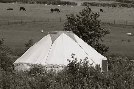Sunset Yurt, Eco Sustainable Camping - Whitegate - Yurt