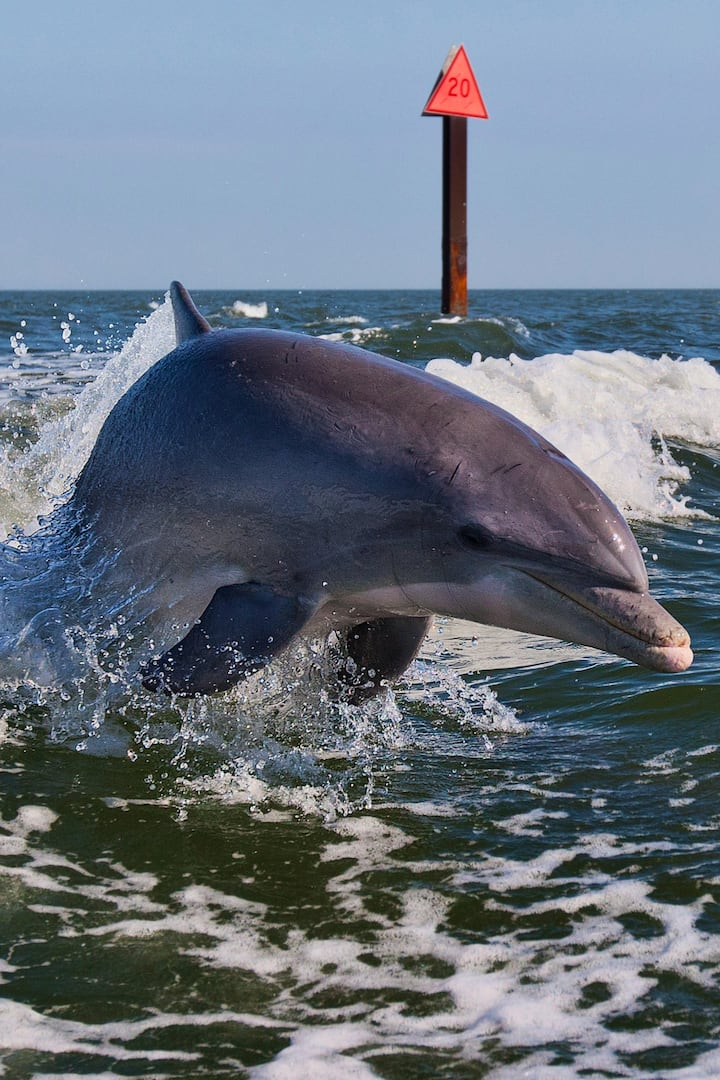 We will see WILD dolphins up close!