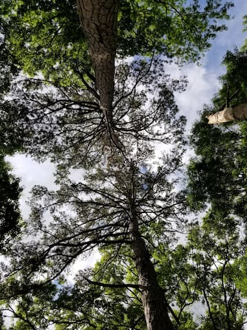 view from the hammock looking up