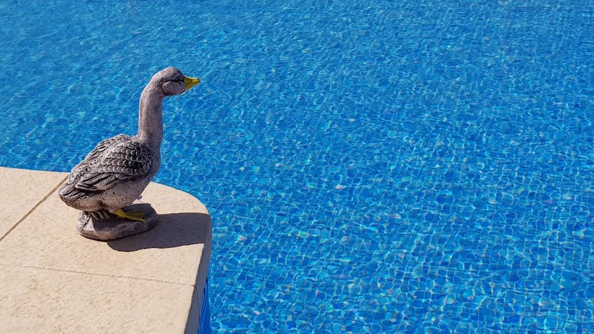 Our crystal clear swimming pool.  Just for our visitors.