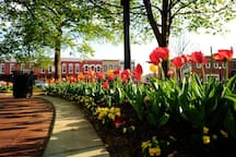 The Bentonville Square is a place for excitement and fun, as well as beauty and simple people watching.