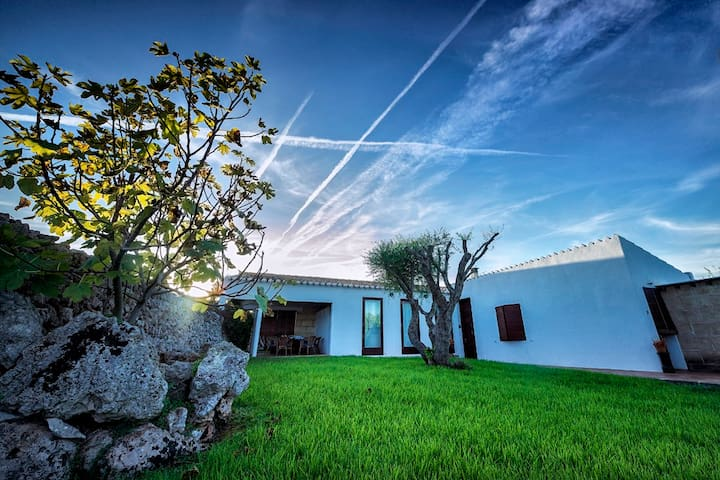 House in the pine forest, Menorca