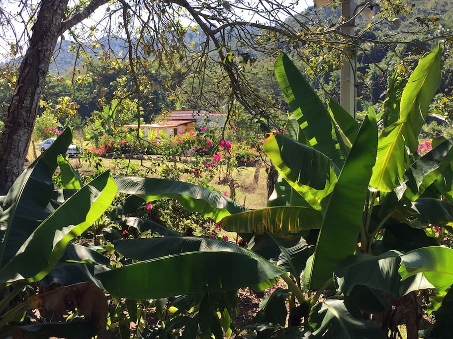 View of the casita from our coffee patch.