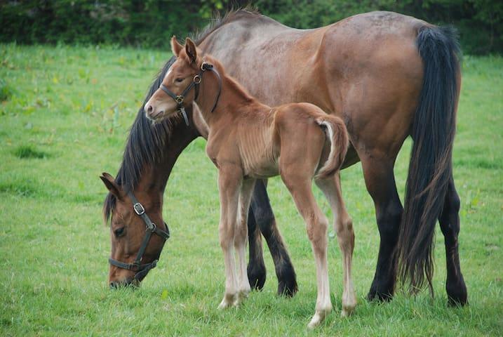Gîte Campagne - Elevage de chevaux, 10 k de la mer - Catteville - Haus