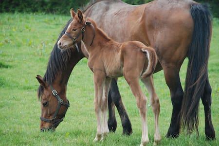 Gîte Campagne - Elevage de chevaux, 10 k de la mer - Catteville