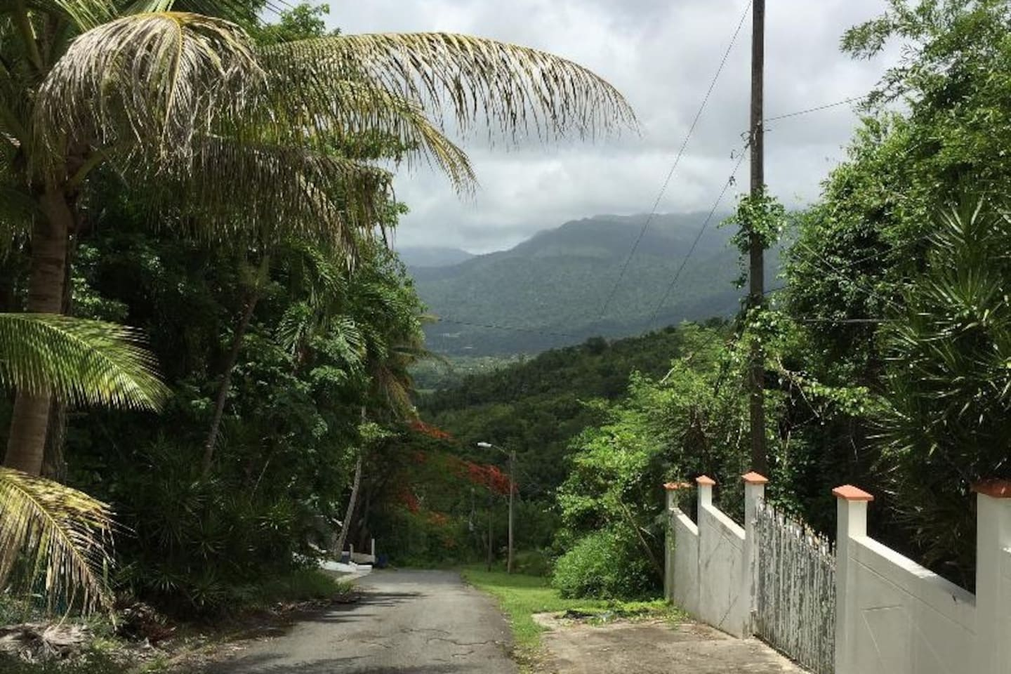 Scenic view of El Yunque National Rain Forest from the front driveway of your vacation home.