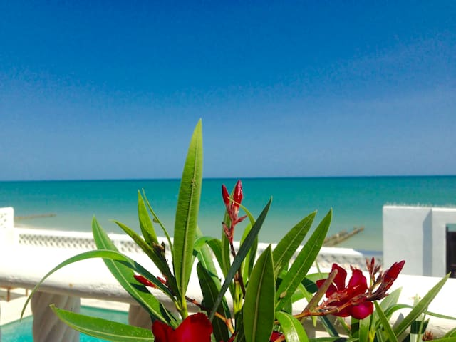 Yucatan Beach Chic - Jaguar Villa! - Chelem - Casa