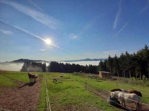 """Liburan di Miniponyhof"" Pertanian organik, lokasi yang tenang"
