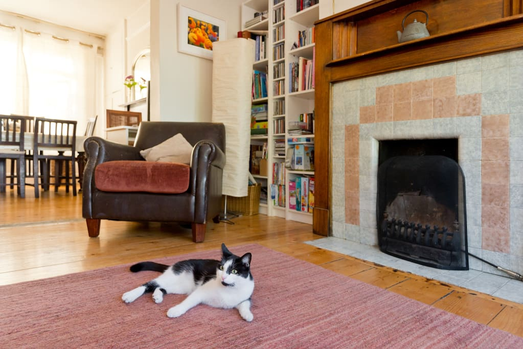 Lucy our cat posing and looking good.