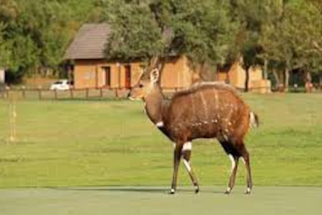 Animals on the golf course